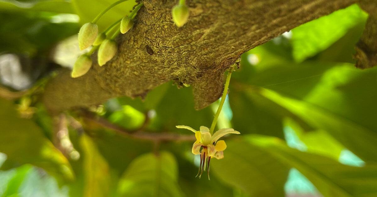 Villa Vanilla: In Search of Spice el Dorado